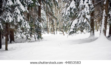Clearing in Winter forest in Czech Republic, with mixed trees, such as spruces, firs, pines and birches