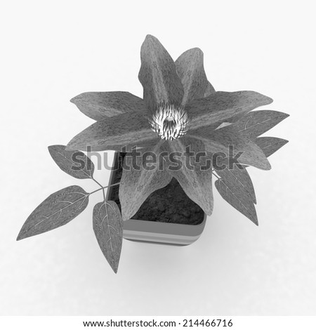 Clematis a beautiful flower in the colorful pot - stock photo