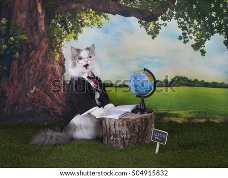 clever cat under the oak holds a geography lesson