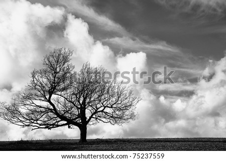 Cliche tree on hill with beautiful blue sky background in black and white