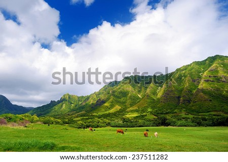 Cliffs and cows of Kualoa Ranch, Oahu, Hawaii - stock photo