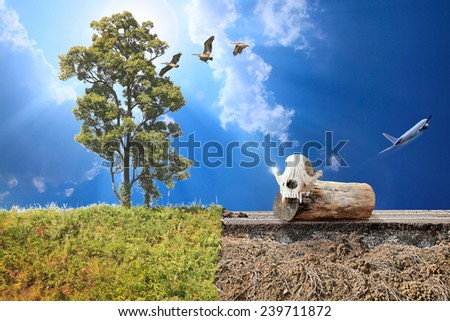 Climate Change Concept Image. Man-made road exceptionally wild animal, cut down trees and then fly away, dead tree stump as a symbol of a soul leaving and a birth of new life after death with hope.  - stock photo