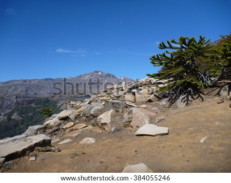 climbing to sierrra nevada peak in las araucarias in chile - stock photo