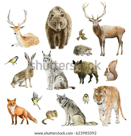 What Is the Importance of Animals to the Environment?