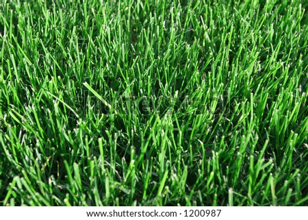 Clipped Green Grass - stock photo