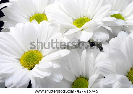 Cloqe up of white daisy flower with yellow heart - stock photo