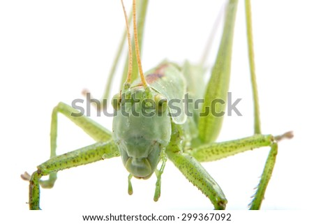 Close-coming green grasshopper isolated on a white background - stock photo