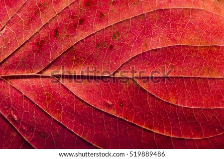 Close detailed macro of a brightly colored fall leaf showing the texture, veins and patterns.