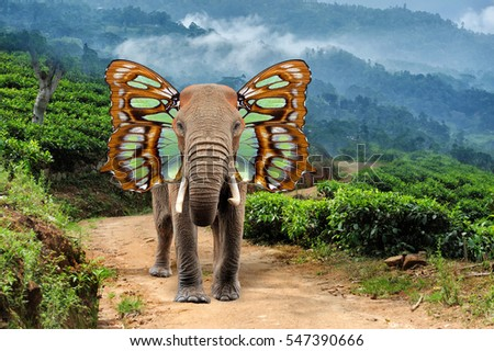 Close elephant with butterfly wings in nature