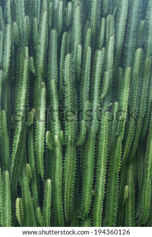 Close fresh cactus background wallpaper - stock photo