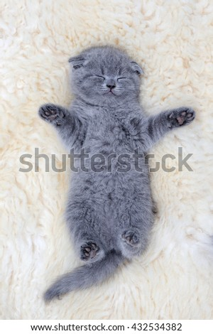 Close funny little gray kitten sleep on white blanket - stock photo