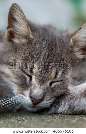 Close head shot of grey sleeping cat. - stock photo