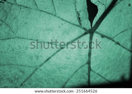 Close-ip picture of a leaf in autumn. - stock photo