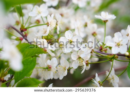 Close look at white flowers - stock photo