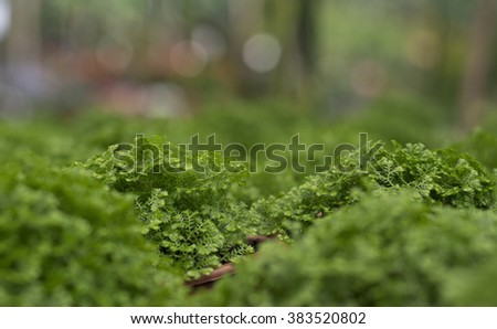 close moss in the vase - stock photo