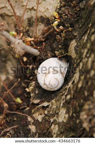 close photo of a snail on the trunk of a tree