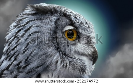 Close portrait of an owl in the night - stock photo