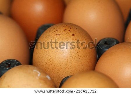 close up abstract eggs background