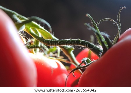 Close up abstract tomatoes - stock photo