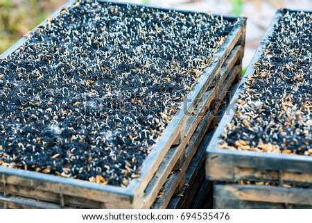 Close up and selected focus of the charcoal used by ancient husk of rice on plastic trays