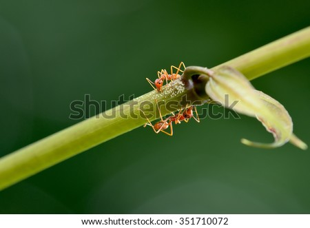 close up ant  - stock photo