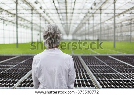 Close-up back portrait biotechnology woman engineer examining a plants for disease from greenhouse farm. Quality control eaf for disease - stock photo