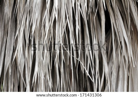 Close-up background of long, tan, brown palm frond leaves hanging from a palm tree in outside during the day in south Florida. - stock photo