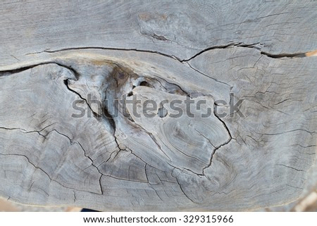 close up background of old tree stump - stock photo