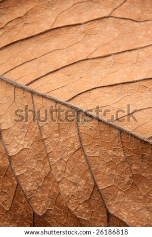 Close up background texture of brown leaf with veins - stock photo