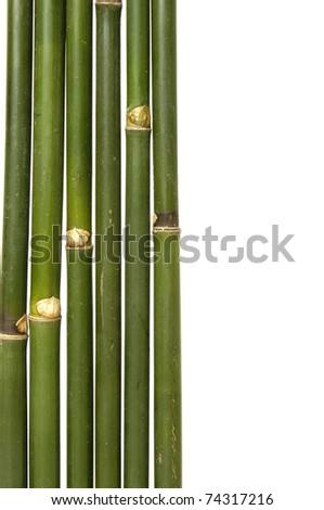 Close up bamboo thin Jungle - stock photo