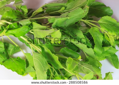 close up basil leaves isolated on white background