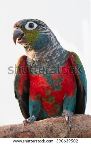close up beautiful colorful parrot sitting on log