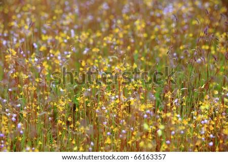 close up, beautiful flower field - stock photo