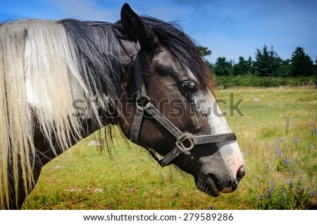 close-up beautiful  horse portrait on blue sky, New Zealand