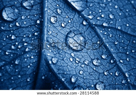 close-up beautiful leaf with drops - stock photo