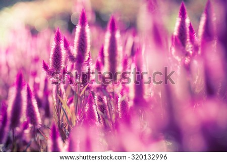 Close up beautiful purple flowers for background