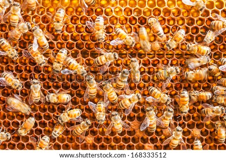 close up bee farm in box - stock photo