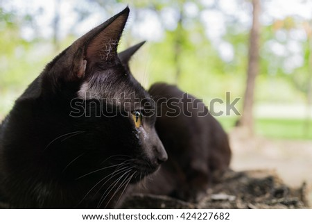 close up black cat outdoor next to the tree - stock photo