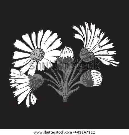 Close-up blooming flower chamomile isolated on white spring eco floral organic leaf line botanical curve symbol botanic summer pen drawing paint black vertical daisy ink illustration stem flora retro - stock photo