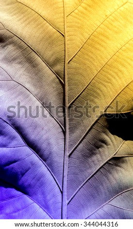 close up botany cell of dry leaf vintage color for background - stock photo