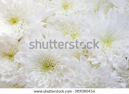 Close up bouquet of white chrysanthemum flowers - stock photo