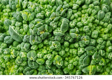 close-up broccoli background texture
