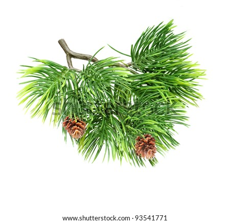 Close up brunch of  of fir tree isolated on white - stock photo