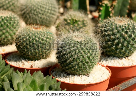 close up cactus - stock photo