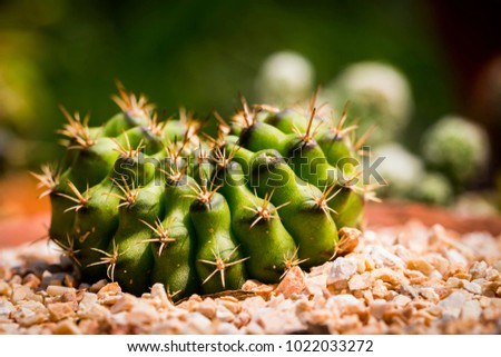close up cactus with blurry background