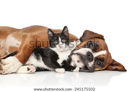 Close-up cat and dog together lying on the floor - stock photo