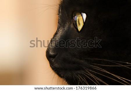 close-up cat eyes - stock photo