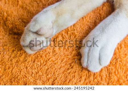 close up cat foot on fabric background - stock photo