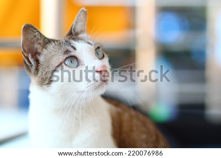 close up cat in Thai temple. It's look cute - stock photo