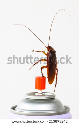Close up cockroach isolated on white, Roach won pesticides - stock photo
